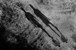 Walk in the park by aniaw