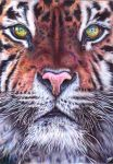 Tiger - Ballpoint pen by margaritafelis