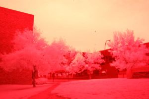 Infra Red by RJeff-Stock