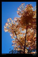 Oranges leaves in the sun by neilcreek