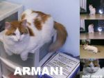 Cat Stock - Armani Pack by supaslimstock