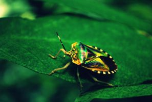 Insect 1 by mariekristel