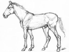 Horse Scribble by ononheli