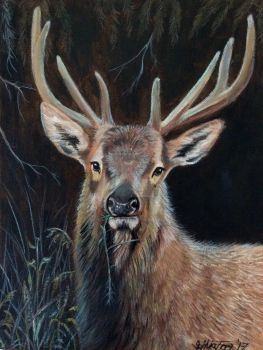 Oil painting of a red deer stag by theArtofsilviafrei