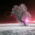 My Tree - IR by Wayman