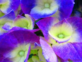Blues and Purples by mrmd53