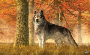 A Wolf in Autumn by deskridge
