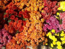 rainbow flowers by wittlecabbage