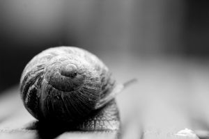 Snail lost in an limited focal field I by pagan-live-style