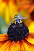 Want to Bee_3 by gregivan