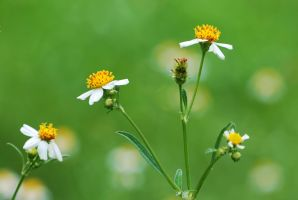 Harmony in green by MatthewLCH