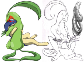 .::Grovyle and Quilava::. by sewreel