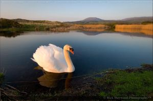 The Swan 153-95 by mym8rick