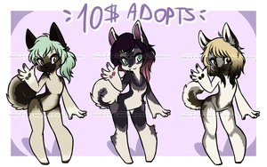 Elkhound Pups Adopts {CLOSED} by miulk