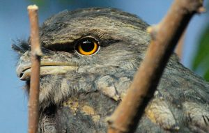 Happy Birthday Em Part 1 by WilliamJCovello