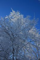 snowy tree 5 by FreedomeSoul88