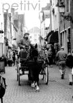 Brugge: Horse Carriage by petit-vi
