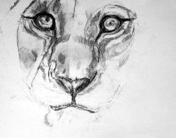 Lioness 1 WIP by lamelobo