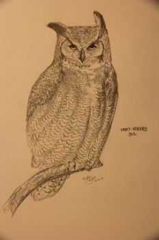 Great- Horned Owl by Manatiini