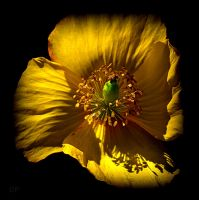 Mixed gold and shadow by Patguli