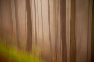 Forest impression by mjagiellicz