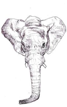 Elephant Trunk by dtasha