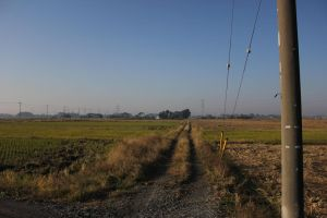 Japanese Rice Camp by lazzaris