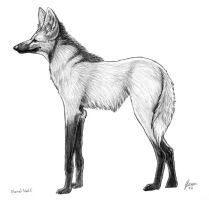 Maned Wolf by SageKorppi