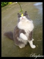 Freud_III by Funerea