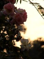 Rose Fall by LordShenlong