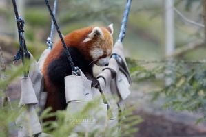 Sitting in the hammock, (re-edit). by Ravenith