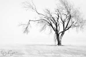 Deserted BW by creynolds25