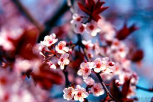 R U MAD 73 - Cherry Blossom by Dj-Bostan