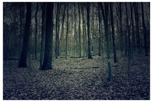 Forest I by AssassinM-Stock