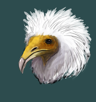 Speed paint Egyptian Vulture by CleverBlue