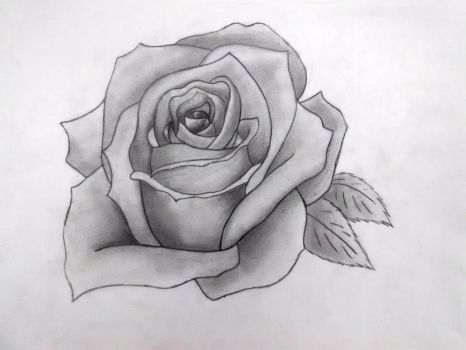 Pencil Drawn Rose by Pichumiku3