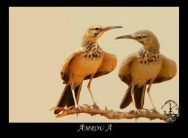 Birds Lovely Watching by AMROU-A