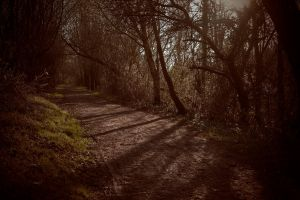 Pathway by cog513