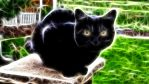 Black Fractal Kitty by Aderes-Devorah