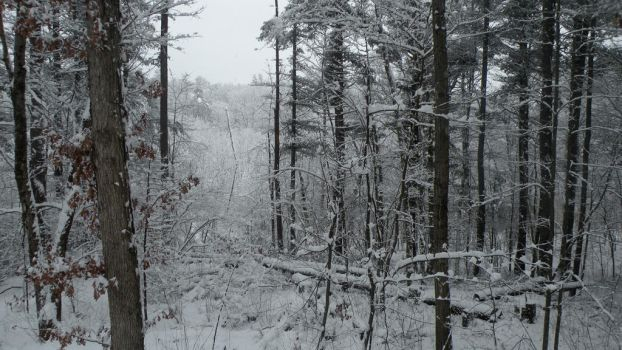 A Year in New England: January by emmijane
