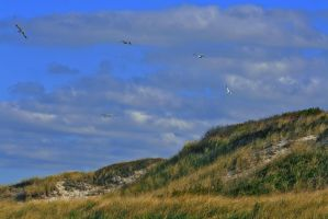 In The Dunes On The Cape by padawan71