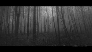 ...into the mist by Fledermausland