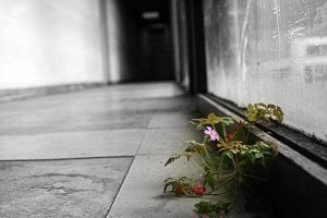 Flower in corridor by markbrmb