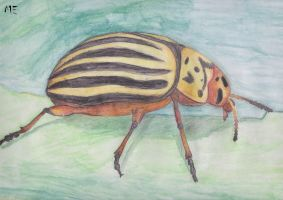 Stripped Bug by ghost111999111