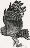 Barn Owl, pen and ink by RamageArt