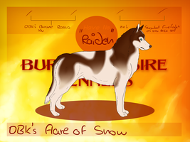 DBK's Flare of Snow by GuardianOfJay