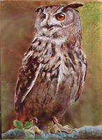 Eagle owl by somniacscaper