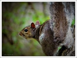 Squirrel...........spring 6. by gintautegitte69