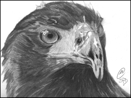 Eagle Commission I 2012 by SilencedRevolution