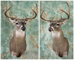 Broken Tines by WeirdCityTaxidermy